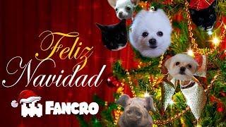 Jingle Bells (Navidad) - Cover Animales