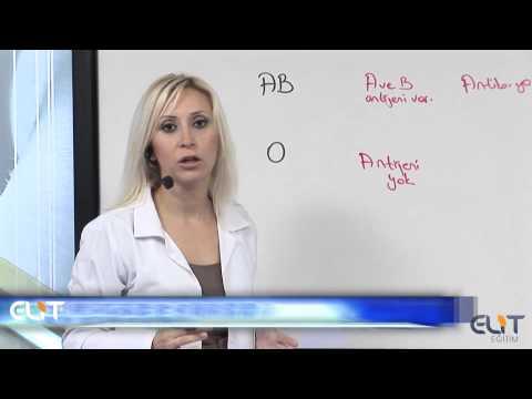 Elit Eğitim Biyoloji Dersi - Kan Grupları Demosudur