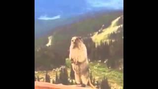 EOQ - Esquilo gritando (É O QUE)