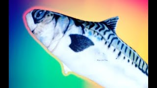 MR. FISH FISH ISMERKEDNI SZERETNE!