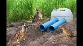 Easy Deep Hole Quail & Bird Trap Using PVC And Plastic Bottle - Amazing Bird Trap With Water Pipe