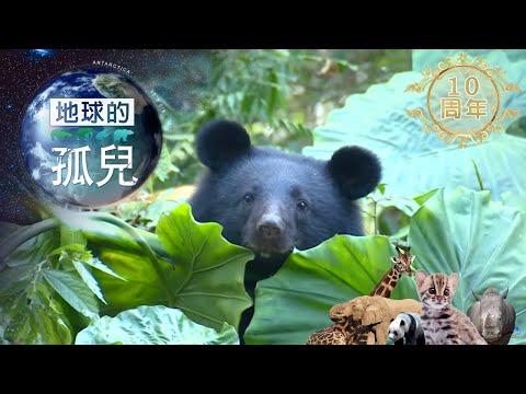 台灣黑熊生存保衛戰 Saving Formosan Black Bears-台灣1001個故事-20190505【全集】