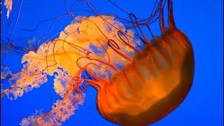 Björk - Unravel - Lyrics On Video