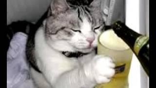 Gato orando borracho