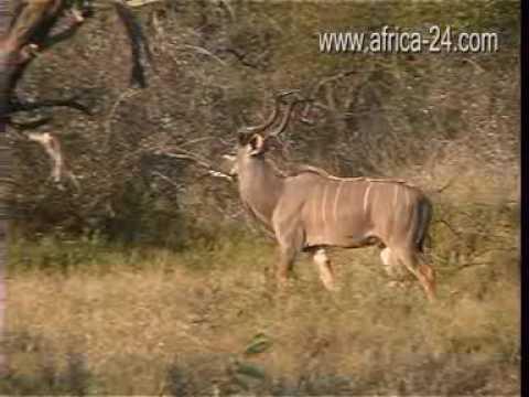 Wild Rivers Nature Reserve Hoedspruit – Africa Travel Channel