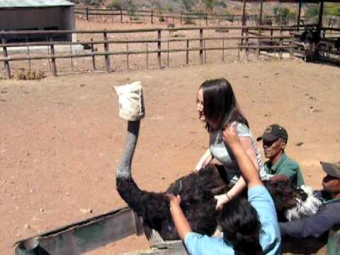 Ostrich riding – South Africa