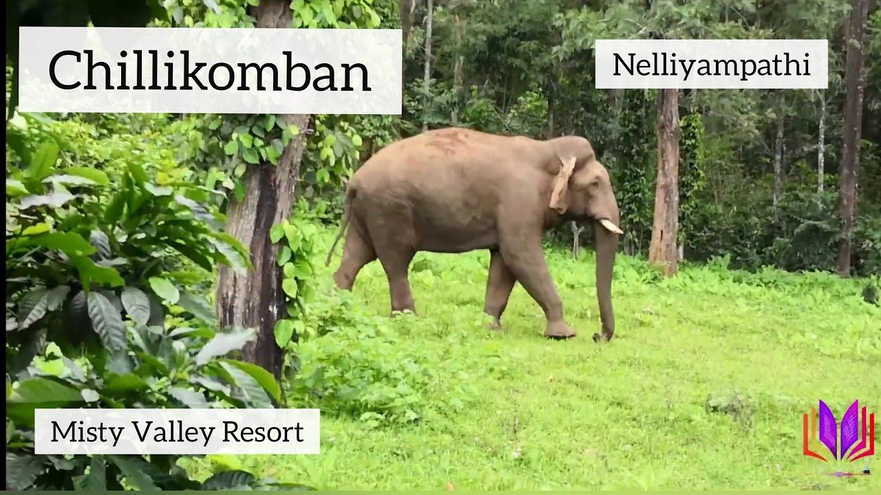 Download thumbnail for Chillikomban: Wild Elephant at