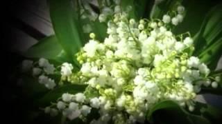 Hófehér  gyöngyvirág