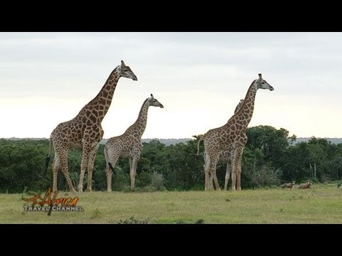 Temba Game Reserve and Olive Park Lodge near Grahamstown South Africa – Africa Travel Channel
