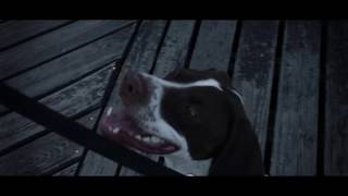 William J Higgins - 9 Days (Official Music Video)