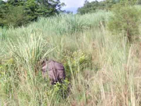 Rinocerontes, lo que faltaba…