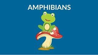 Learn about Amphibians | Amphibians Video | Types of Amphibians
