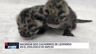 Nuevos residentes de el Zoo de Naples