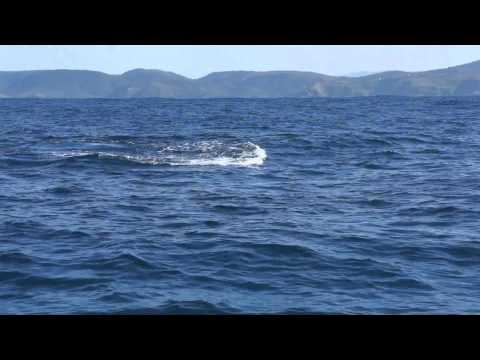 South Africa sardines.wmv