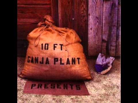 10-ft-ganja-plant-top-down-bonus-track-niko-tsellas
