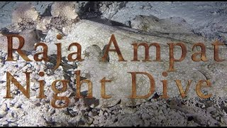 Raja Ampat Night Dive