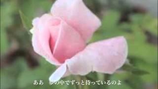 """Rose Bud""  Americo"
