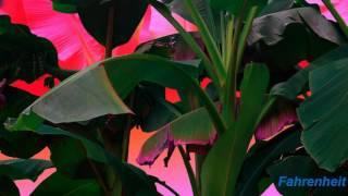 A$AP Ferg - Dope Walk