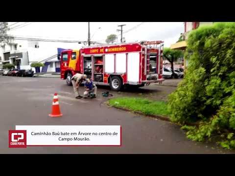 Galho de árvore podre cede e caminhão baú bate em Campo Mourão - Cidade Portal