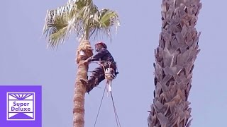 Palm Tree Trimmers | Stoned Mode