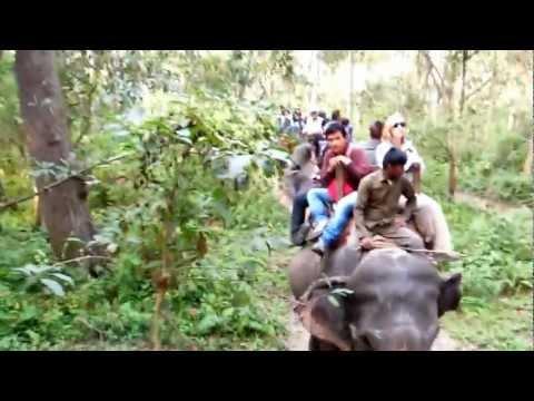 Elehant Safari