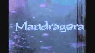 Mandrágora - Albatroz