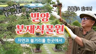 [경남타임즈] 정성스러운 손길로 한땀한땀 만들어낸 정원! 밀양에 있다? #분재식물원 #동물농장 다시보기