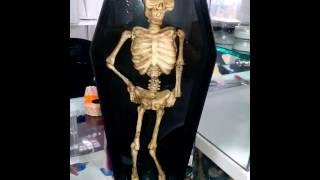 Esqueleto bailarín Halloween 2016