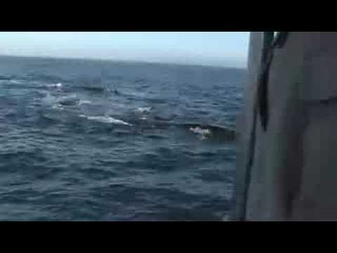 Whale Watching in Hermanus – Boat Trip out to see Whales.