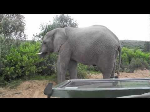 Shamwari Game Reserve | Eastern Cape Reserves | Expert Africa