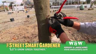 Healing a Tree Wound - The Street Smart Gardener