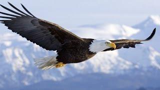 Green Moon - Eagle