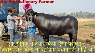 30 LITRE- Milk yield - Murrah Buffalo can touch  Sunil Sir