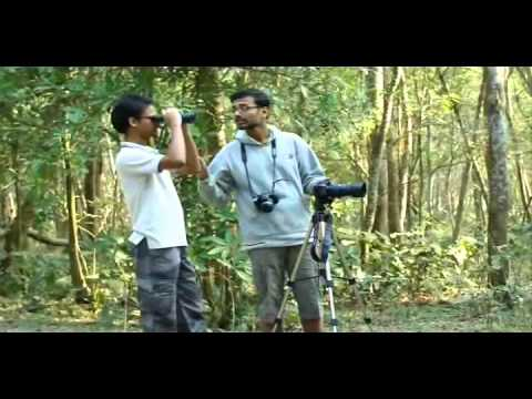 A short docu on Bird Watching