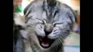 Toque gato miando