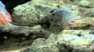 Ossadas de animais gigantescos são descobertas no sertão do Piauí