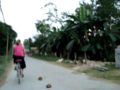 Cycling in Nepal:  people, cars, & elephants in our way!