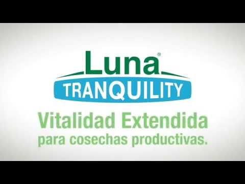 Luna Tranquility® Único en su categoria!