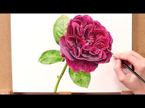 How to paint a realistic red rose in watercolour with Anna Mason