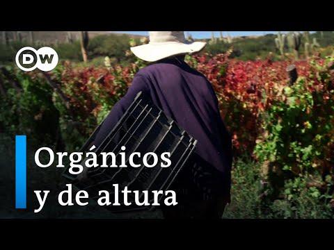 De altura: vinos orgánicos de Jujuy