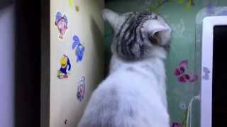 Мой коте)