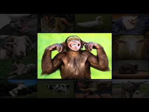 روميكس الحيوانات على الإقاع الشعبي Remix 36