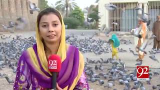 Hundreds of pigeons find abodes in Multan's Qila Kuhna Qasim Bagh | 12 Oct 2018 | 92NewsHD