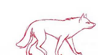 Wolf Walk/run cycles