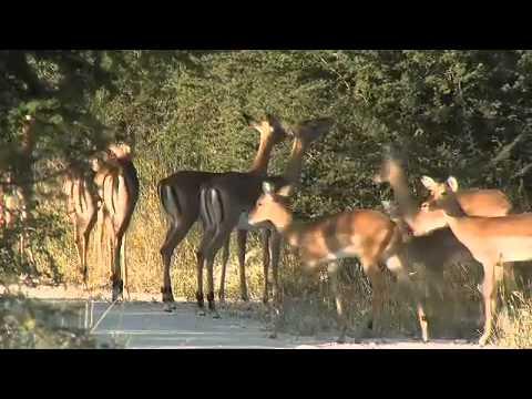 Madikwe Game Viewing Madikwe Game Reserve Big 5 North West