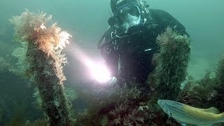 Scuba Diving Equipment Review: Northern Diver Varilux Micro R Torch