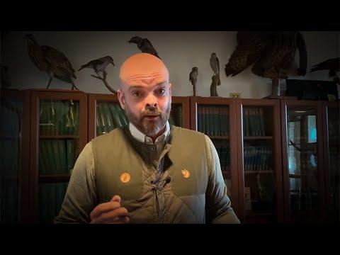 Daniel Ligné om remissvaret på jakttidsförslaget för fågel