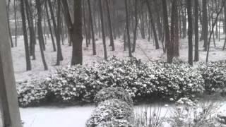 Snowy raain :))