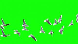 Green Screen flock of birds