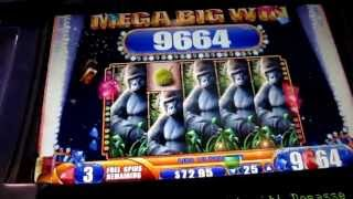 LIVE MEGA BIG WIN Queen of the Wild nickels